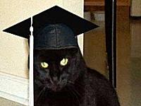 Cat earns life experience online degrees