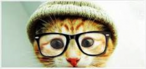 Top Online Socially Progressive Colleges|Hipster kitty with glasses