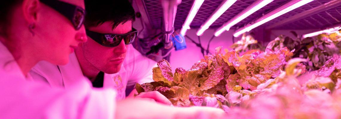 Graduates working in environmental science careers
